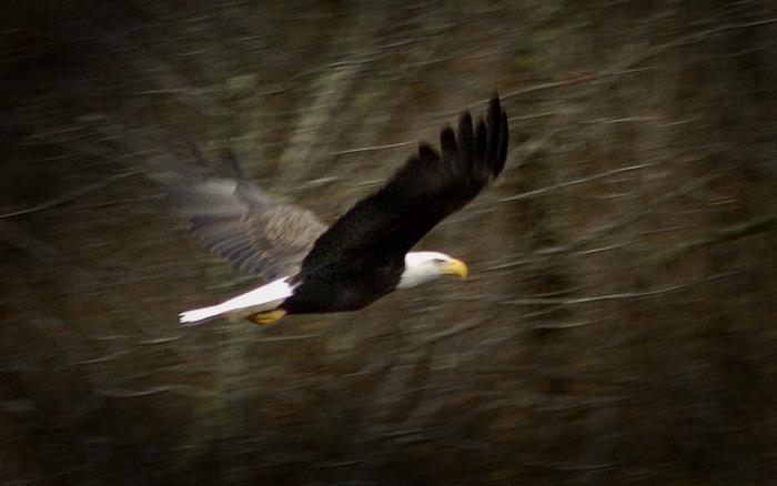 eagle-zest-4_dsc0081-copy