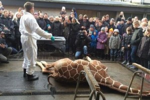 Marius the giraffe, is butchered in front of audience full of young children.