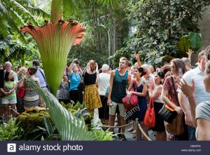 People viewing -- and smelling -- the corpse flower (titan arum) in Washington, D.C.